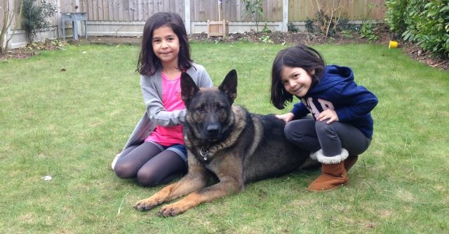 Family protection dogs. Protection for family