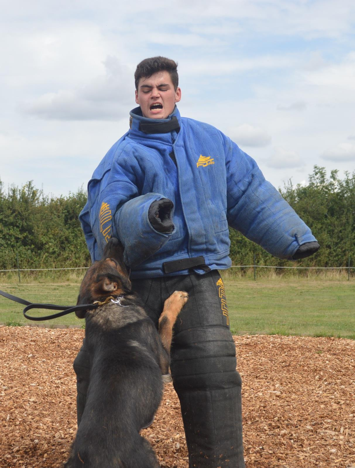 Protection dog trainer Joshua Taylor