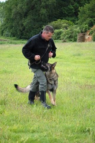 Maintain your protection dogs performance with our maintenance programs - K9 Protection