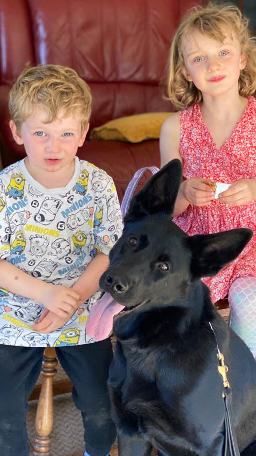 Family protection dog - Kali