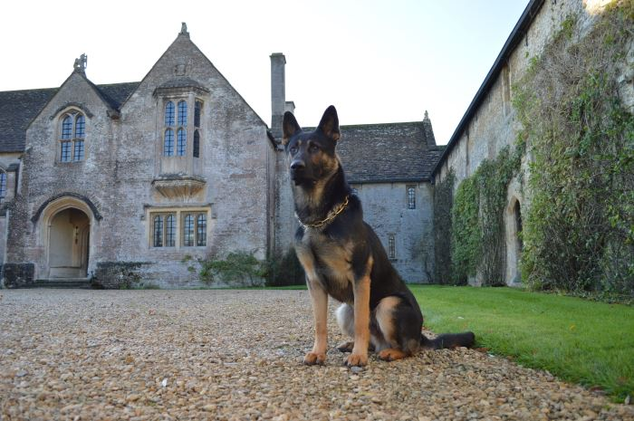 Elite Protection Dogs For Sale