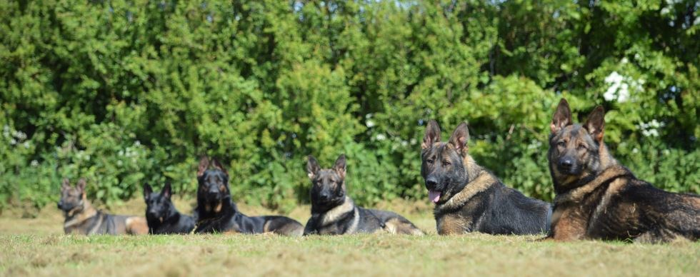 Protection Dogs & Country Living