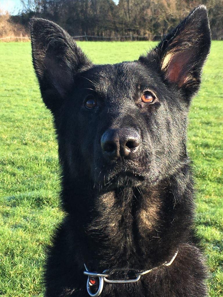 Premise Indicator Words: Elite Protection Dog Eric