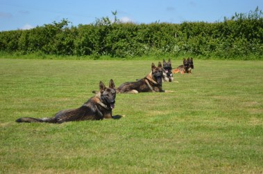 group obedience