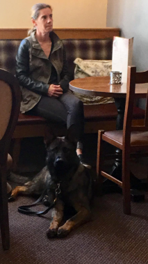 Elite Protection Dog Voldy at the local coffee shop
