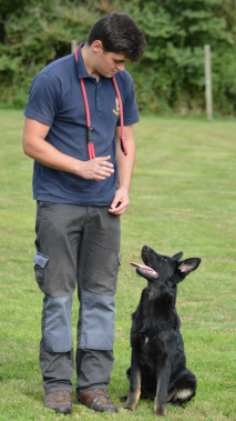 Elite Protection Dog Eric learning obedience