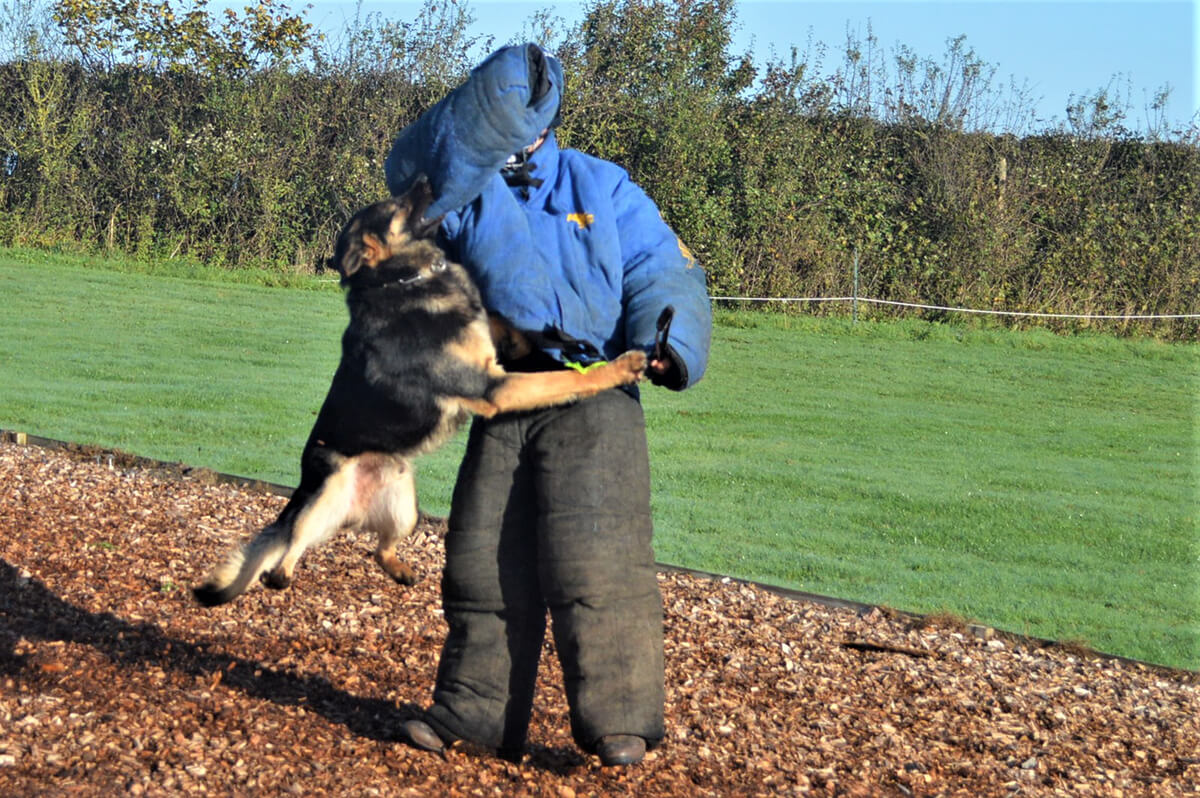 Attack by fully trained protection dog