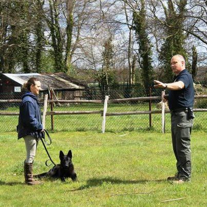 Family defence dogs. Trained protection dogs for family and home from K9 Protector